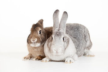 Two rabbits on a white background