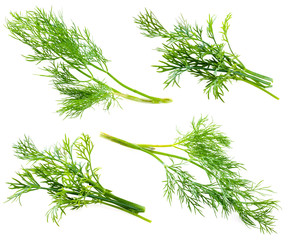 Fresh raw dill isolated on white background