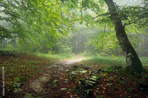 Fotobehang Bos in mist path in forest with rain and fog