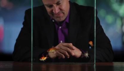 Hispanic man at table watching goldfish swim