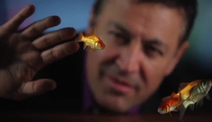 Hispanic man at table observing goldfish