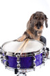 Drums and dog