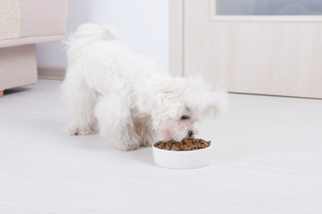 Dog eating dry food