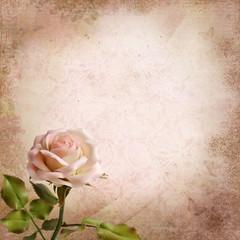 Rose on a vintage background