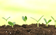 Green seedling growing from soil.on bright background