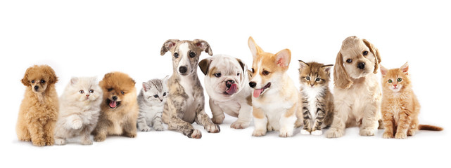 Group of Puppies фтв kitten of different breeds, cat and dog
