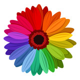 Fototapety Gerbera flowers with multicolored petals. Vector illustration.