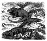 Galapagos : Lizards - Zoology poster