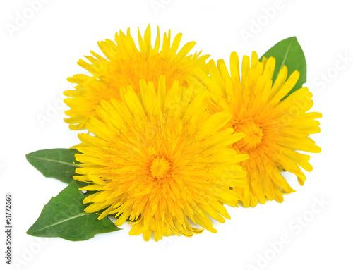 Foto op Canvas Paardebloem Dandelion flowers