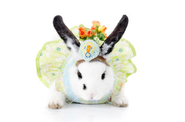 funny rabbit with green dress and hat