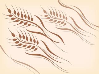 小麦_曲線