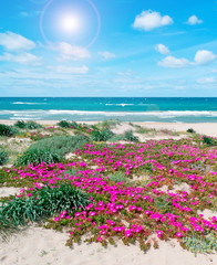 flowers and sand in spring