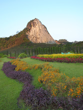 Plant and flower garden near mountain.