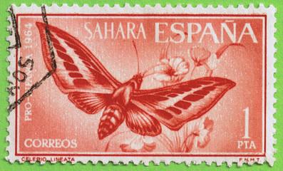 sello sahara