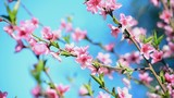 Peach blossom in spring in front of blue sky