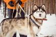 Постер, плакат: Собака в зимнем лесу