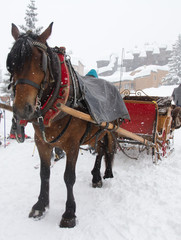 Winter transport