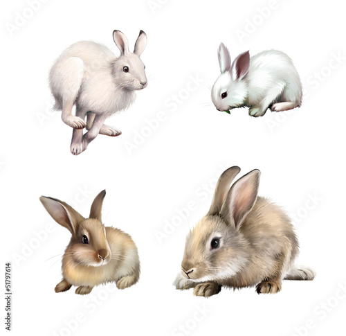 White Gray Rabbit, hare running away. Isolated on white