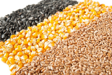 Mix corn, wheat, sunflower seeds on a white background