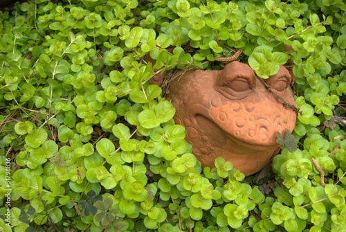 Frog surrounded by vines