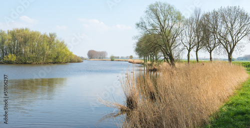Idyllic Dutch landscape in springtime