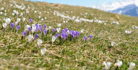 printemps en haute montagne