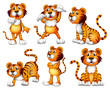 Six positions of a tiger
