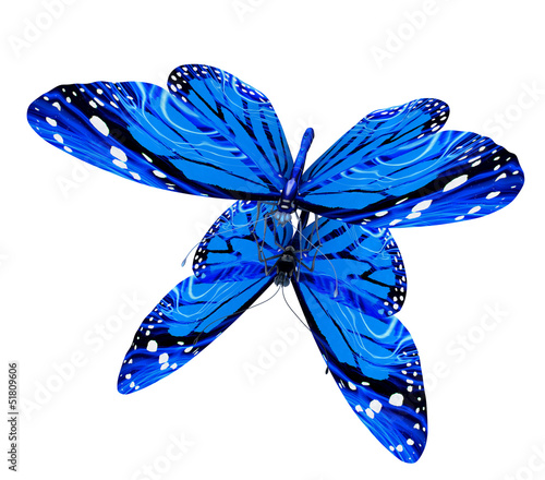 Fotobehang Vlinder Butterfly on white reflective background