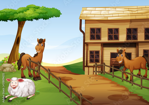 Two horses and a sheep in the farm