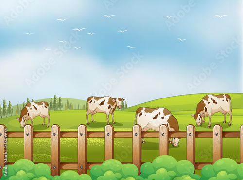 A farm with cows