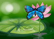 A blue butterfly and the pink flower at the pond