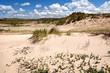 sand dunes in Zandvoort aan Zee