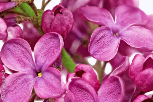 Foto op Canvas Macro Beautiful Bunch of Lilac close-up