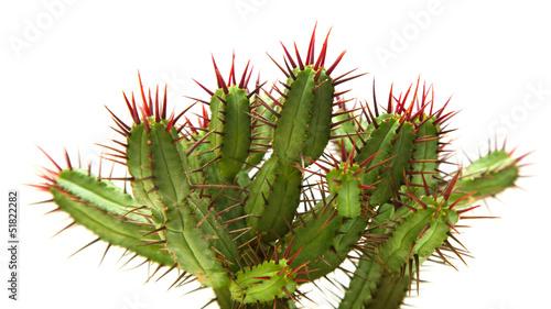 Canvas Cactus cactus