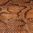 Peau de serpent vintage