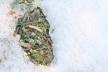 thawn