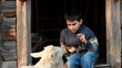 Young boy feeding the goat