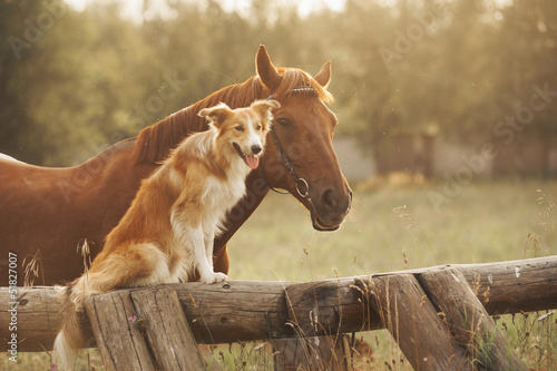 Leinwandbild Motiv Red border collie dog and horse