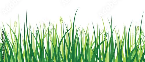 Grass Border - 51827842