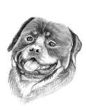 rottweiler dog illustration sketch - 51829281