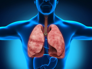 Male Anatomy of Human Respiratory System