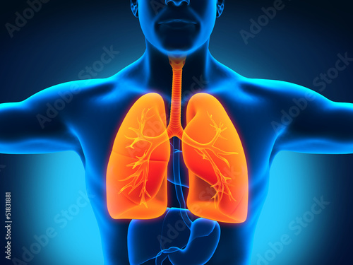 Male Anatomy of Human Respiratory System