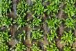 canvas print picture - Jungpflanzen in Aufzucht