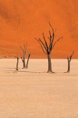 Dead trees in Dead Vlei, Namibia