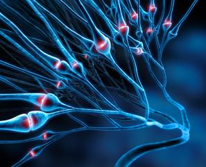 Synapsen-Netz