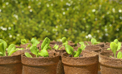 Gardening - Pots of Seedlings