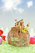baby rabbit with golden crown