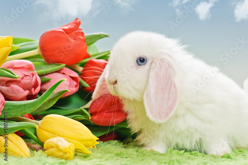 white baby rabbit with flowers