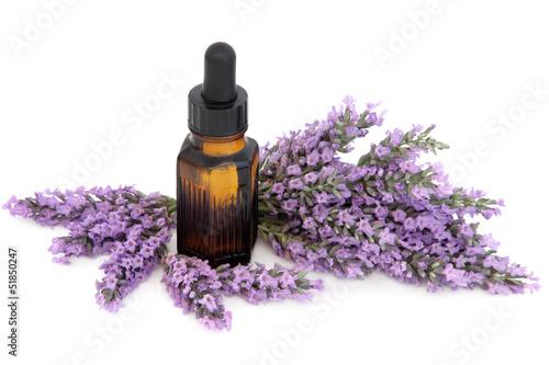 Foto op Aluminium Lavendel Lavender Herb Flowers