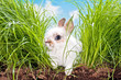 baby rabbit in a meadow